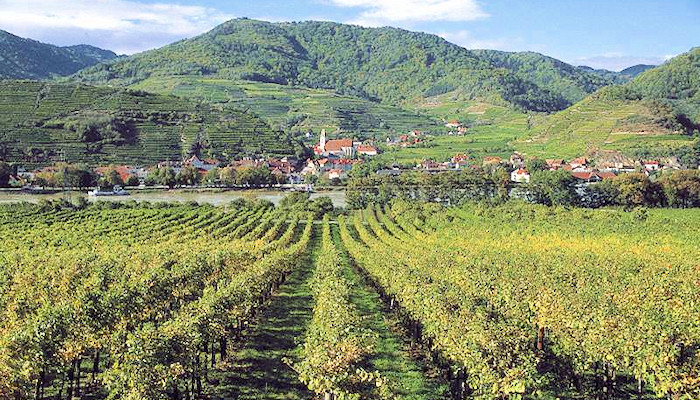 Wachau-The Wine Region on the Danube, Lower-Austria